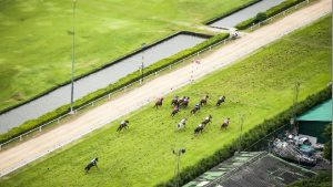 Bet365 Horse racing promos
